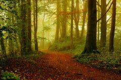Skog på soluppgång i hösten Arkivbilder