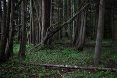 Skog på västkusten fotografering för bildbyråer