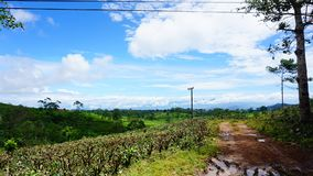 Skog på västra java Indonesien Arkivbilder