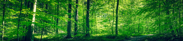 Skog på våren Royaltyfri Fotografi