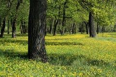 Skog på våren Arkivbilder