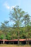 Skog på Wang Takhrai Waterfall i Nakhon Nayok Thailand Arkivbild