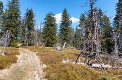 Skog på stort Fatra område, Slovakien Royaltyfri Foto