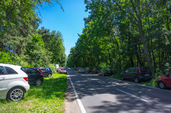 Skog parkerade bilar Fotografering för Bildbyråer