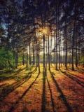skog poland royaltyfria bilder