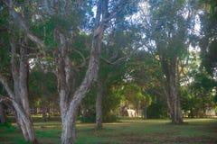 Skog runt om den Brisbane staden i Queensland, Australien Australien är en kontinent som lokaliseras i den södra delen av jorden  arkivbilder