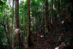 Skog runt om den Brisbane staden i Queensland, Australien Australien är en kontinent som lokaliseras i den södra delen av jorden  arkivfoton