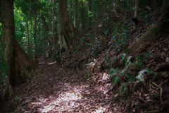 Skog runt om den Brisbane staden i Queensland, Australien Australien är en kontinent som lokaliseras i den södra delen av jorden  royaltyfri foto