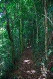 Skog runt om den Brisbane staden i Queensland, Australien Australien är en kontinent som lokaliseras i den södra delen av jorden  royaltyfri bild