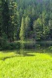 Skog sjö Royaltyfri Fotografi