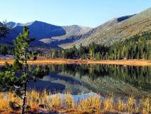 Skog sjö i bergen. Royaltyfria Bilder
