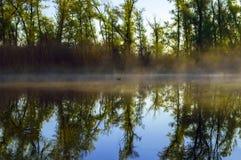 Skog sjö i morgonen Arkivbilder