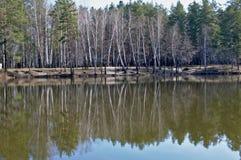 Skog sjö i morgonen Arkivfoto