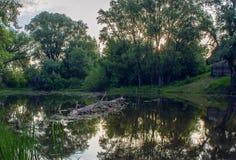 Skog sjö i sommar på gryning royaltyfria bilder