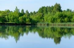 Skog sj? i sommarsikten, landskap arkivfoto