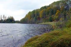 Skog sjö med gräs- kuster i höst royaltyfri bild