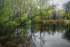 Skog sjö på en molnig höstdag arkivbild