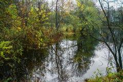 Skog sjö på en molnig höstdag royaltyfria foton