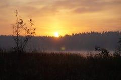 Skog sjö på solnedgång Sommar arkivfoto