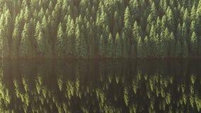 Skog sjö, träd som avspeglas i vattnet framförande 3d Arkivbilder