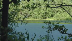 Skog sjögräsplan, sommar runt om trädliljor i vattnet stock video