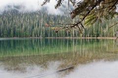 Skog sjön är i dimman, Joffre Lake royaltyfri foto