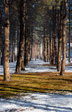 Skog skogsmark Fotografering för Bildbyråer