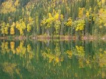 Skog som avspeglas i sjön royaltyfri foto