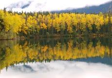 Skog som avspeglas i sjön royaltyfri fotografi