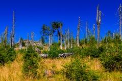 Skog som förstörs av skällskalbaggen. Arkivbilder