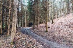 Skog som fotvandrar slingan i en djup skog på backen Royaltyfri Bild