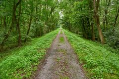 Skog som går rutten Royaltyfri Foto