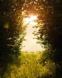 Skog som gör klar den gröna ängen med grönt gräs på solnedgången arkivfoto