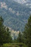 Skog som inramas mellan träd Arkivfoto