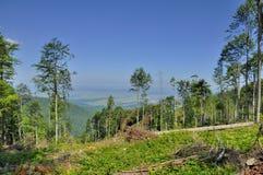 Skog som klipps ner i Carpathians berg Fotografering för Bildbyråer