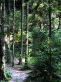Skog som målat Arkivfoto