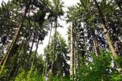 Skog som målat Arkivbild
