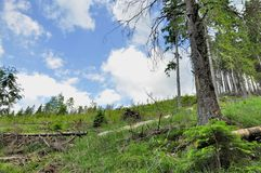 Skog som ner klipps Royaltyfria Foton