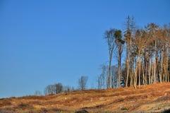 Skog som ner klipps Arkivbild