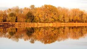 Skog som reflekterar i sjön arkivbild