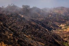 Skog som skövlas av brand i bergen Arkivfoto