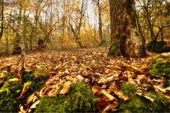 Skog som täckas i döda sidor arkivfoto