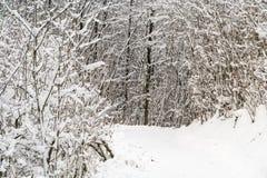 Skog som täckas i snö under vinter Royaltyfri Fotografi