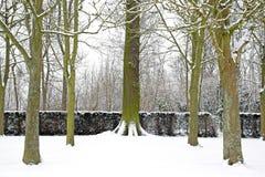 Skog som täckas med den insnöade vintern (Frankrike Europa) Royaltyfria Bilder