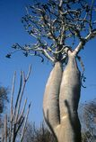 skog spiny madagascar Arkivbilder