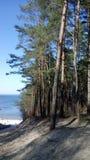 Skog, strand och hav royaltyfria foton