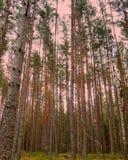 skog sweden Royaltyfria Foton