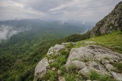 skog thailand Arkivbilder
