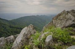 skog thailand Arkivfoto