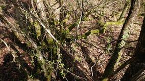 skog thick royaltyfri fotografi
